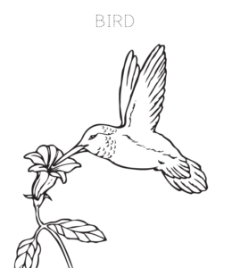 Bird Coloring Page 1 For Kids