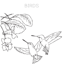 Coloring Pages Of Birds Flying | 300x260