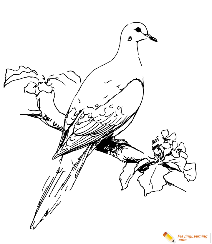 Bird Mourning Dove Coloring Page for Kids