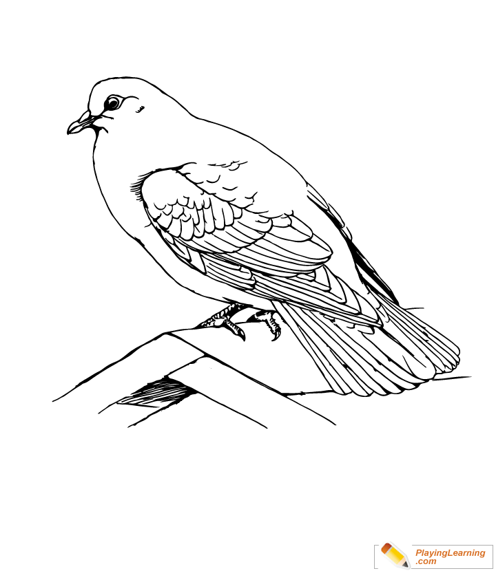 Bird Rock Dove Coloring Page Free Bird Rock Dove Coloring Page