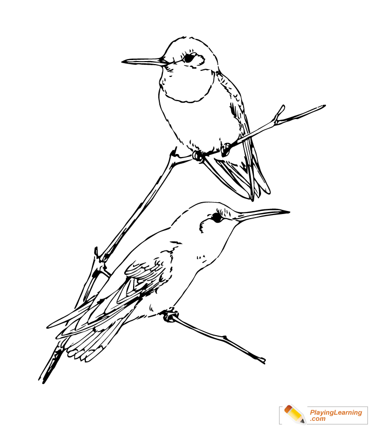 Bird Ruby Throated Hummingbird Coloring Page | Free Bird ...