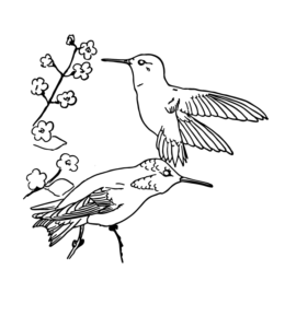 feeder bird rufous hummingbird coloring page for kids - Hummingbird Coloring Page