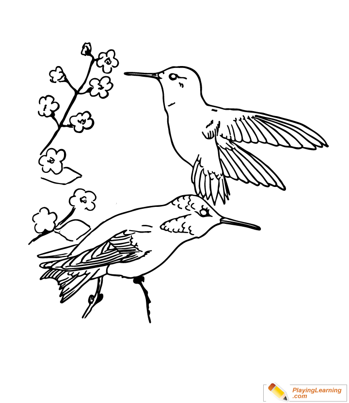 Bird Rufous Hummingbird Coloring Page | Free Bird Rufous Hummingbird ...