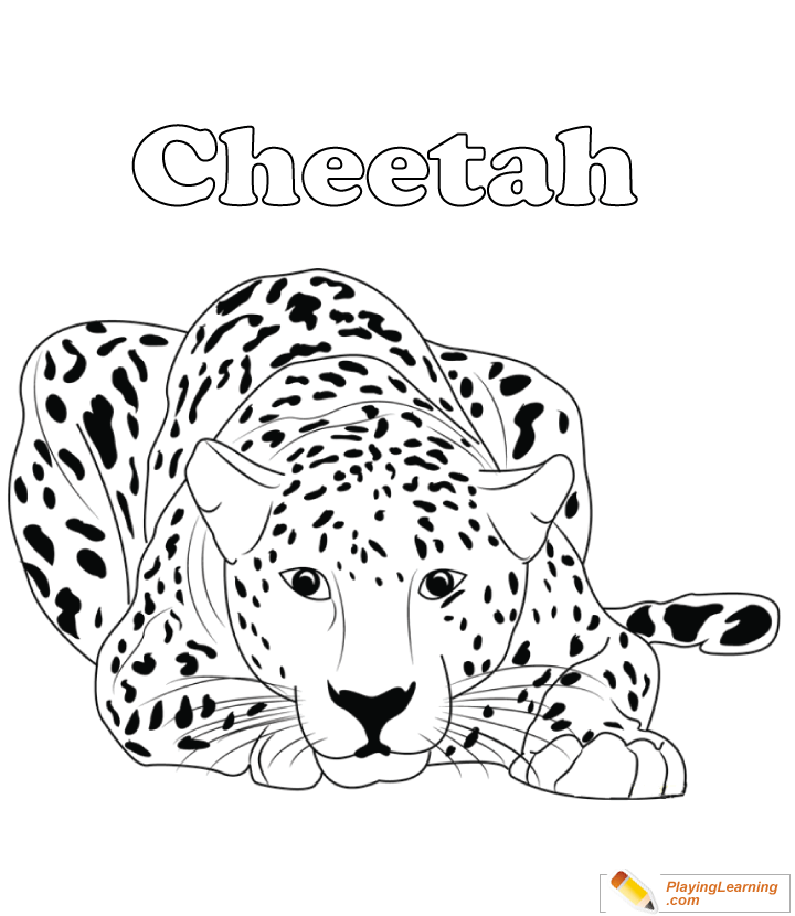 Cheetah Standing on Rock Coloring Page - Free Cheetah Coloring ... | 830x720