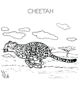 cheetah coloring pages playing learning cheetah coloring pages playing learning