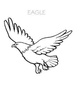 Eagle Coloring Pages | Playing Learning