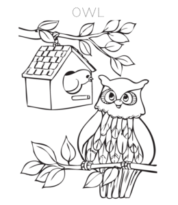 Owl Coloring Pages Playing Learning